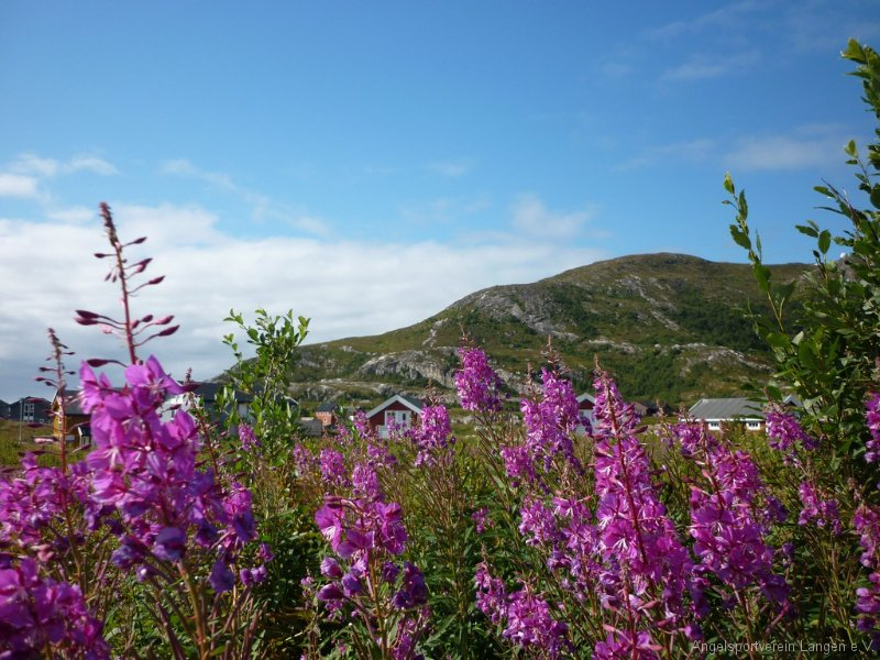 norge2011-00335